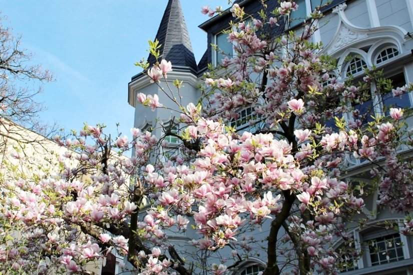 Wochenrückblick #13 - LA MODE ET MOI, der Blog aus Köln